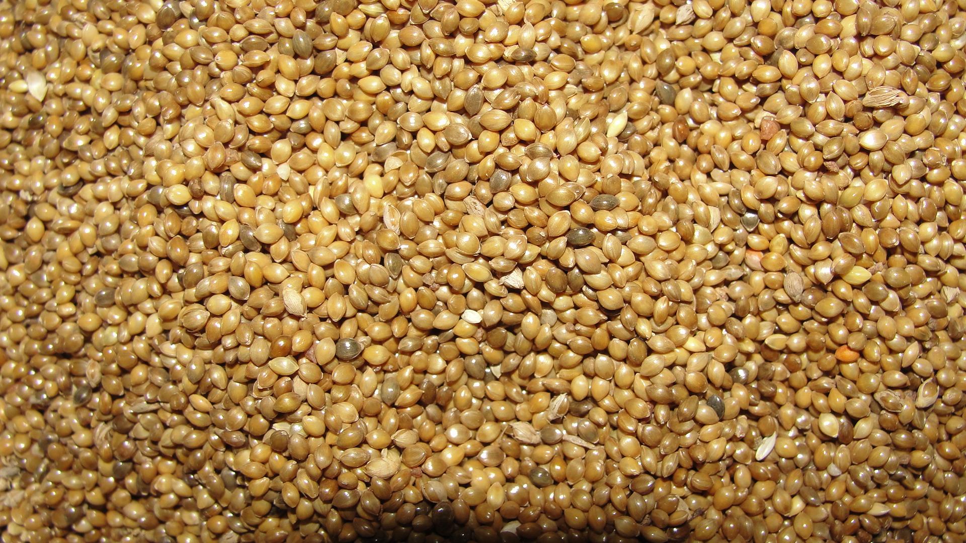 Dr. Smarty Millet Flour Gluten Free